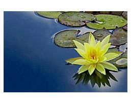 Lotus.nu